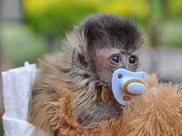 Mystic Monkeys Wild Animal Park - Farm Buffelsdrift
